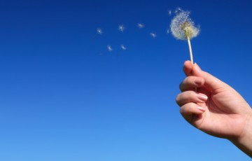 Dandelion spreading seeds in female hand on background of blue s
