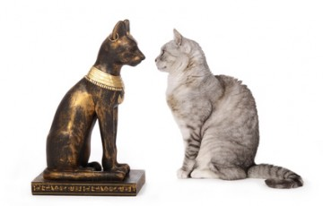 chat regardant une statue de chat gyptien