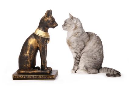 chat regardant une statue de chat gyptien
